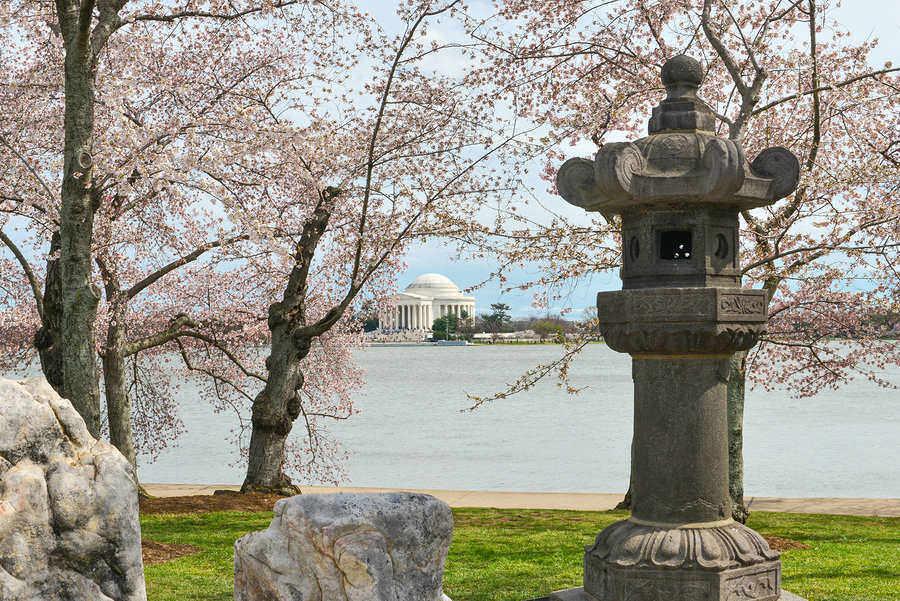 Cherry trees in bloom at Tidal Basin in DC in springtime – a great treat for those moving to the Capitol