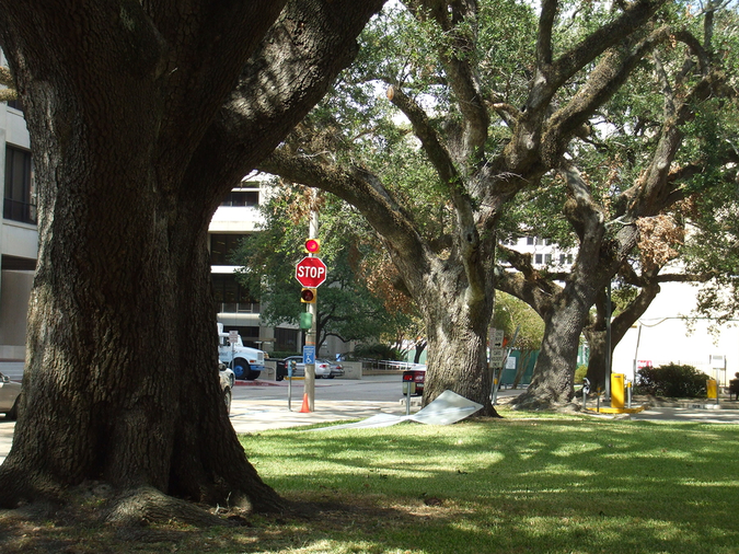 Neighborhoods with streets lined with majestic southern oak trees near downtown