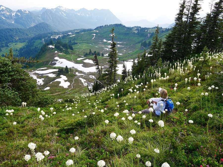 The stunning view from High Skyline Trail in Mt. Rainier National Park
