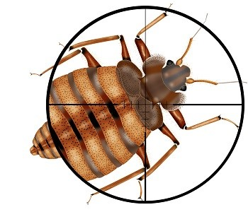 The threat of bed bugs is taken seriously in the moving industry.